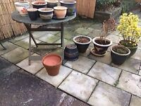 garden plant pots some with mature plants and garden table
