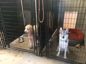 Dog Daycare and Boarding Kennel London Ontario image 5