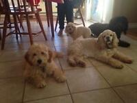 Puppy Care & Small Dog Daycare - In Home Petsitting Service