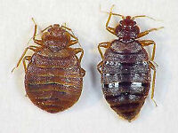 Complete Bed Bug Services