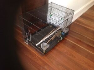 Cage suitable for small bird or rodents Killara Ku-ring-gai Area Preview
