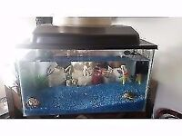 Great condition, 40x10x10cm fish tank with blue stones and disney ornaments.