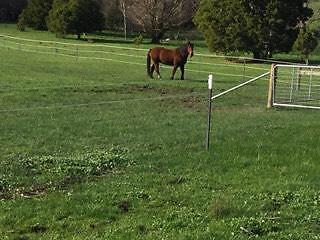 """Horse agistment near Kyneton. Bunjil""""s Rest Agistment Farm"""