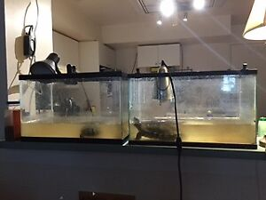 Free turtle and tank