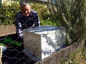 BEE SWARM REMOVAL Mardi Wyong Area Preview