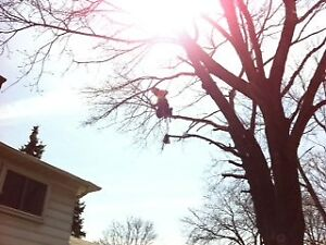 Professional Tree Services By Even Cut Tree Specialists