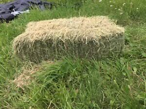 Hay for Sale - Horse Square Bales