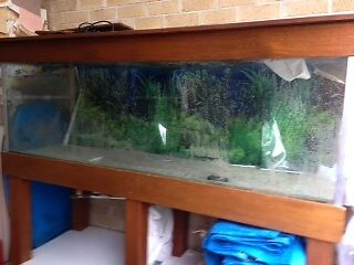 FISH TANK, STAND AND ACCESSORIES Merrimac Gold Coast City Preview