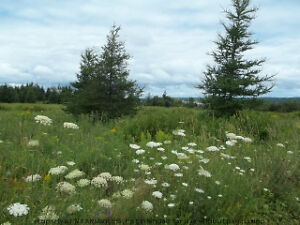 Ocean view lot near Tatamagouche