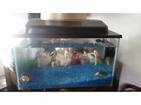 Fantastic condition 40x10cx10 cm fishtank with ornaments, stones and expensive stingray filter