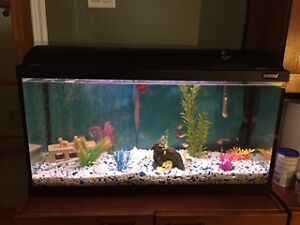 25 gallon aquarium (8 years old), fish and all accessories