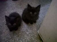 Two beautiful kittens looking for a new home