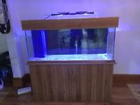 """Marine Aquarium 4ft 7"""" and Cabinet - Oak"""
