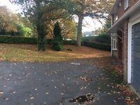 All Garden Maintenance - Winter Tidy Leaf Clearances