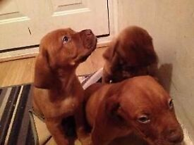 Puppies needing a forever home.