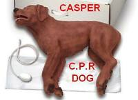 Mar26 DOGSAFE Canine First Aid Course