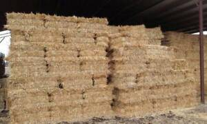 Oaten hay small Bales Central Goldfields Preview