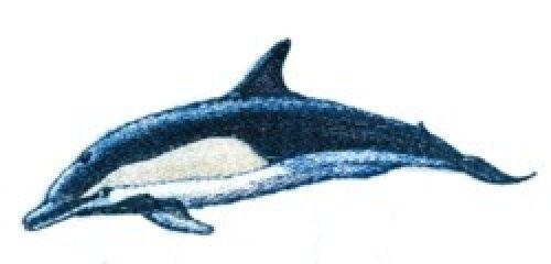 Embroidered Sweatshirt - Dolphin BT3907 Sizes S - XXL