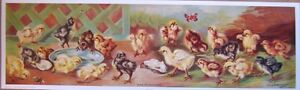 art print~YARD OF CHICKENS~VanVredenburgh~vtg chick repro farm bird long 35x10.5