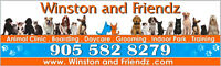 Doggie Daycare, Boarding, Grooming, Training, Retail, Vet Clinic