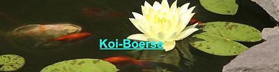 koi-boerse