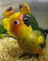 EXOTIC PETS *GRAND OPENING LABOUR DAY WEEKEND SALE!!!********