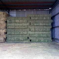 Good Quality Lucerne Hay Q31 Small Square For Sale Tullamarine Hume Area Preview