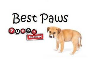 Best Paws Puppy Training Mount Lawley Stirling Area Preview