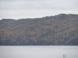 Land for Sale in Ivany's Cove - $19,900- 10 Mins East Clarenvile St. John's Newfoundland image 2