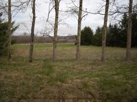 4.25 ACRE LOT IN CENTREVILLE ONLY FIVE MINUTES TO KENTVILLE