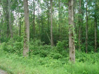 100 Acre Lot With Logging Potential