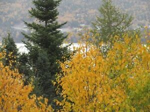 Land for Sale in Ivany's Cove - $19,900- 10 Mins East Clarenvile St. John's Newfoundland image 8