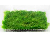 8cm x 8cm Moss Marimo Carpet On Mesh Cladophora Easy Live Aquarium Plant Shrimp and Fish Safe