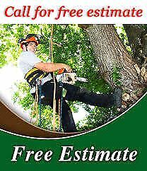 TREE TRIMMING/REMOVAL