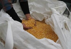 Attention Hunters!! Corn in totes.