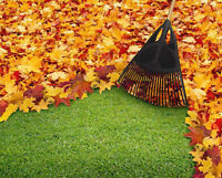 Fall Cleanup - Professional Landscaper, Neighbourly Prices