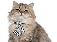 Found ; Cat With A Tie – Special Edition