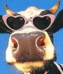 moo*cow*corner