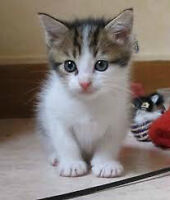 Chatons 2 mois, a donner (514) 605-8962 Karine
