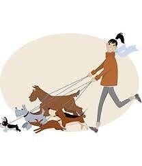 Dog Walker for North London area