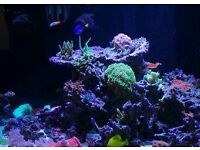 Marine reef tank wanted