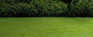 30$ lawn mowing Marsden Park Blacktown Area Preview