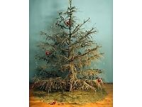 Looking for old plastic artificial christmas tree to use for my birds.