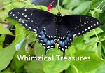 Whimzical Treasures