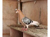 Bird it is a male