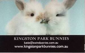 Kingston Park Bunnies ARE HAVING VALENTINES DAY BUNNIES Maroota The Hills District Preview