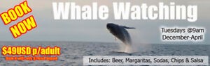 WHALE WATCHING *book with only $19 CAN*
