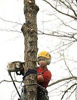 Tree Trimming, Pruning, Removals, Eaves trough Cleaning