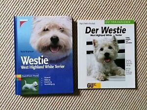 West Highland Terrier In Schleswig Holstein Ebay Kleinanzeigen