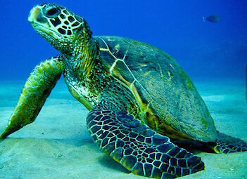 TurtleLouie89